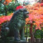 京都御苑 白雲神社 12月7日
