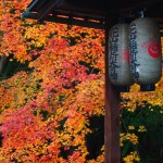 京都御苑 宗像神社 12月7日