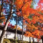 東福寺 12月