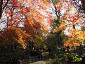 京都家庭裁判所
