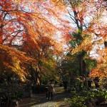 京都家庭裁判所 12月9日