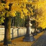 今宮神社の門前