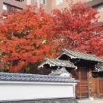 三井越後屋京本店記念庭園 12月10日