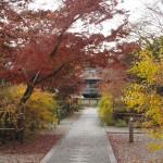 梨木神社 12月11日