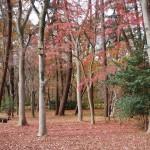 京都御苑 母と子の森