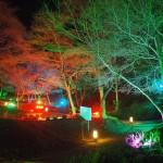 「いわたやま」 光の森