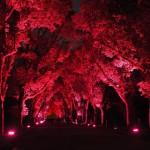 京都府立植物園のイルミネーション