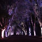 京都府立植物園 12月