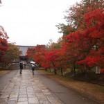 仁和寺 参道の紅葉は早い 11月11日