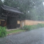 迎称寺の萩と大雨