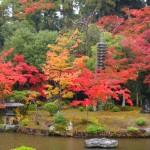 清凉寺 美しい紅葉 11月11日