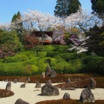 東福寺 光明院の桜