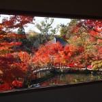 永観堂 盛りの紅葉 11月19日
