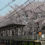 西向日駅 4月1日