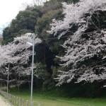 男山 4月1日