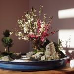 東林院 梅の鉢植え