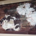 光清寺 浮かれ猫
