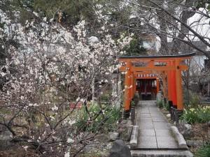 平野神社の桃桜