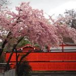 車折神社 3月