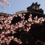 豊国神社 3月21日