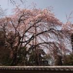 嵯峨有心堂 3月22日
