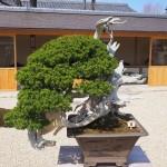 芳春院 盆栽庭園