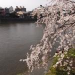 鴨川 3月24日