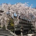 大石神社 3月