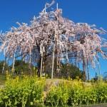 宇治市植物公園 3月