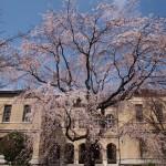 京都府庁 3月25日