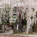 妙満寺 3月29日