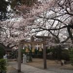 柊神社 3月29日
