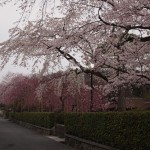 野村別邸前 3月29日