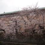 京都市美術館 3月29日