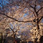 祇園白川 3月29日