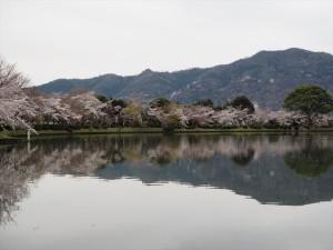 大覚寺 大沢池