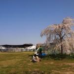 梅小路公園 3月30日