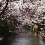 高瀬川 3月30日