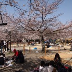 円山公園 3月30日