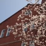 同志社大学 3月30日