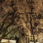 大石神社 3月30日