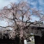 妙覚寺 3月