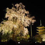 東寺 ライトアップ 4月