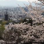 京都霊山護国神社 4月