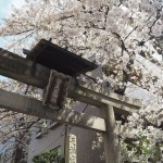 菅大臣神社 4月