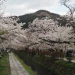 銀閣寺道 4月