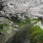 哲学の道 4月