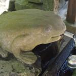 玉津岡神社 蛙