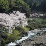 上林川 4月