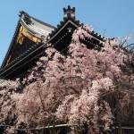 仏光寺 4月